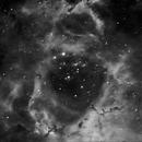 NGC 2237 Rosette Nebula,                                Wilton Costa