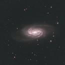 ngc2903 Galaxy in Leo,                                Alessandro Bianconi