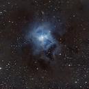 NEBULOSA DEL IRIS, NGC 7023,                                GONZALO