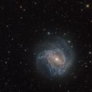 M 83 Southern Pinwheel Galaxy,                                Tom Taig / Bob Taig