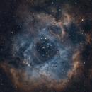 NGC2244, 2237 Rosette nebula, L-RGB-SHO,                                Thomas