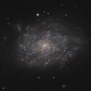 NGC 7793,                                Gary Imm