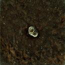 NGC 6888 dans le Cygne Get