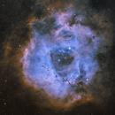 NGC 2239 - Rosette Nebula,                                  Rhett Herring