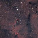 Elephant Trunk Nebula  IC1396,                                Andres Noriega