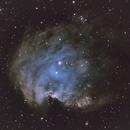Monkey Head nebula NGC2174,                                Roswell Astronomy