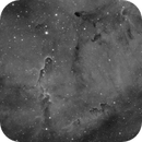 IC 1396A - Elephant's Trunk Nebula in Ha,                                John Hosen