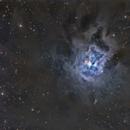 NGC 7023 Iris Nebula,                                Dan Wilson