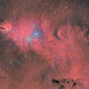 Cone and Christmas Tree nebulae,                                Carastro