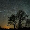 Stars over forest,                                  Vital