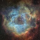 [SHO] Sh2-275 - NGC2244 Nébuleuse de la Rosette @Calern,                                Raypulsif