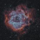 Rosette Bi-Colour,                                Phil Wright