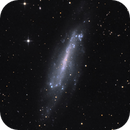 NGC 4236,                                Gotthard Stuhm