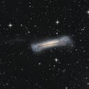 NGC 3628 - The Hamburger Galaxy,                                Casey Good