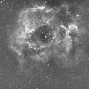 C49 Rosette Nebula-NGC 2237-Ha-Meade 80 ED triplet-Orion flattener-ASI 1600 MM-Pro,                                  Adel Kildeev