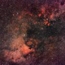 Cygnus wide-field,                                Steve Bell