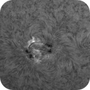 Sun in H-Alpha 8th of September 2021 - AR2866 & 2868 timelapse,                                Arne Danielsen