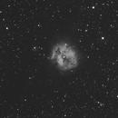 IC 5146, The Cocoon Nebula, Caldwell 19, SH2-125,                                Steven Bellavia