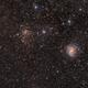 NGC 6946 with sn 17eaw, NGC 6939 ,                                Stefan Muckenhuber