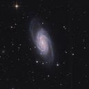NGC2903,                                Uros Gorjanc