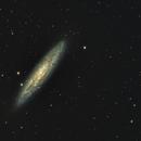 Sculptor Galaxy / NGC253,                                  KiwiAstro
