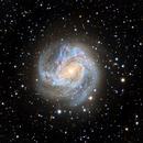 M83 - Southern Pinwheel Galaxy,                                Roger Gifkins