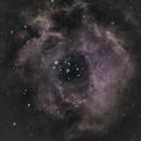 NGC2237 - The Rosette Nebula,                                Mark Hudson