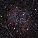 Rosette Nebula,                                Jan Curtis