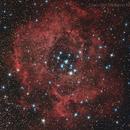 NGC2246 - Rosetta Nebula,                                Massimo Micieli