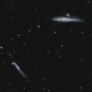 NGC 4136 , baleine,                                echosud