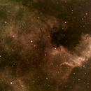 North America Nebula (NGC7000),                                Miles Zhou