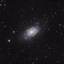 Spiral Galaxy in M81 Group (NGC 2403),                                Scott Denning