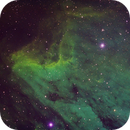 Pelican Nebula--hubble palette,                                Dave B