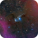 Altman Nebula,                                Rabbit Zhang