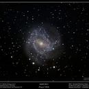 M083 - Southern Pinwheel Galaxy,                                Terry Belia