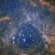 NGC 2244 - Rosette Nebula Collaboration,                                Joshua Millard