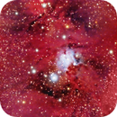 Tree Christmas Cluster with Cone Nebula,                                PepeLopez