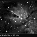 Cone Nebula, Hα, 24 Feb 2016,                                David Dearden