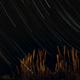 Roseaux sur un filé d'étoiles,                                Julien CAILLOU