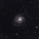Pinwheel Galaxy (M101),                                Wenhan Guo (Danny)