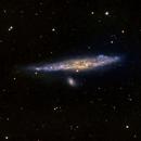 Whale Galaxy/NGC 4631,                                John Kroon
