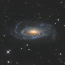 NGC 5033,                                Brice