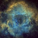 NGC2237 Rosette Nebula,                                Peter Jenkins