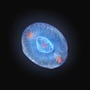 NGC 6826 - Planetary Nebula, Hubble Space Telescope,                                Rudy Pohl