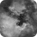North American and Pelican Nebulas in Ha,                                David Frost