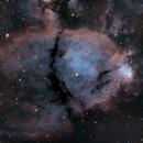 IC1795 Fish Head,                                Rich