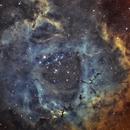 NGC2237 Rosette Nebula - In progress,                                Jonathan Durand