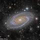 Messier 81 Closeup,                                Miles Zhou
