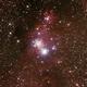 NGC2264 - Christmas Tree Cluster and Cone Nebula,                                Geoff Scott