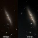 SN 2014 J - in M 82,                                Sammler